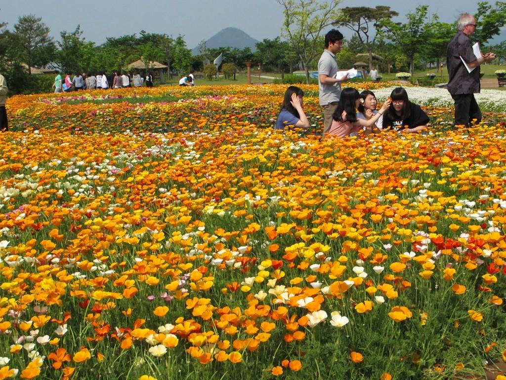 Flower Power in Suncheon Bay