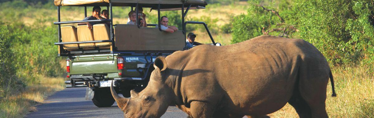 A rhino in KwaZulu Natal.