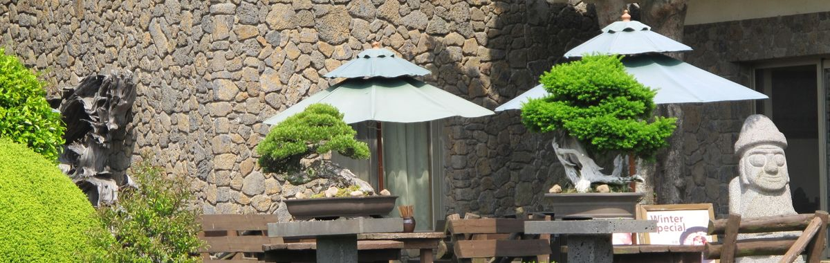 The Spirit Gardens on Jeju Island in South Korea offer a wealth of bonsai trees.