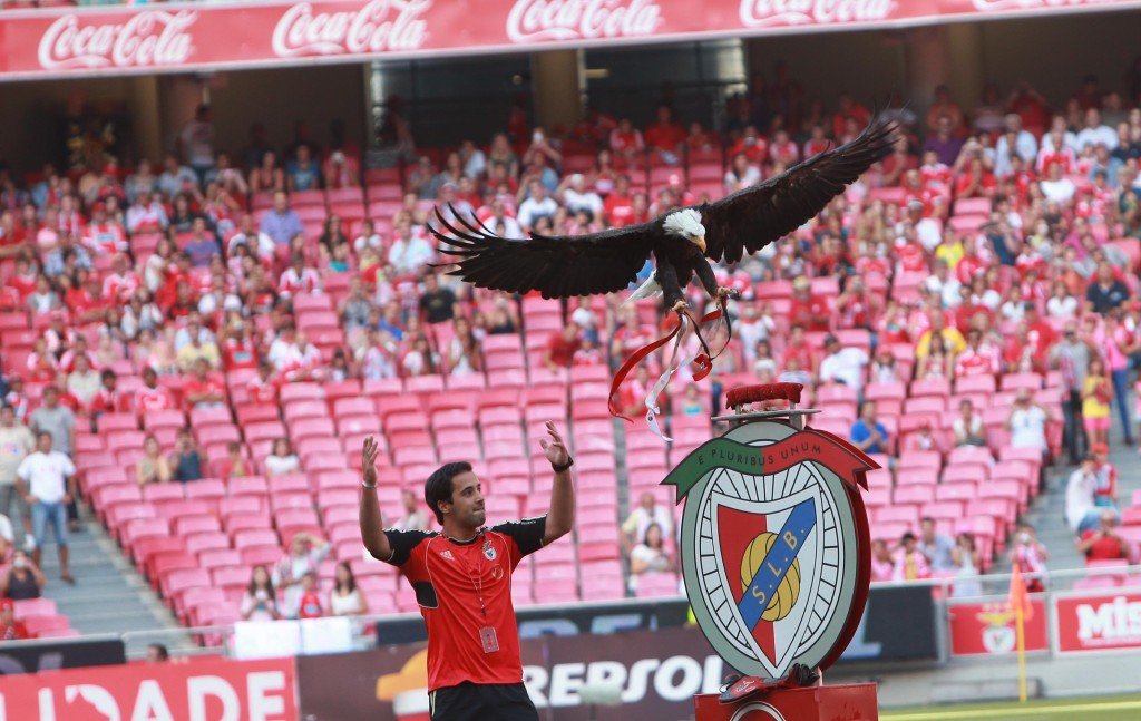 Eagle-lady Vitória fulfilling her duty at the Benfica Soccer Stadium
