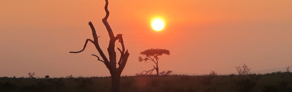 Dawn in the African bush: Preserving nature and resources are prime goals of humankind.