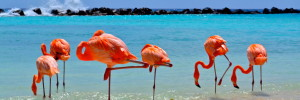 Happiness in Aruba