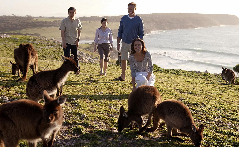 ... or Kangaroos happily skipping around ...
