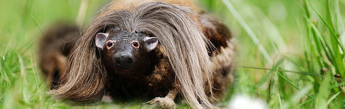 The Wild Haggis: Fact or fiction?