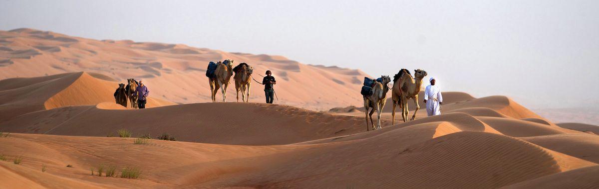 A Camel Train: OBO-Thomas-expedition, Kingdom of Bahrain