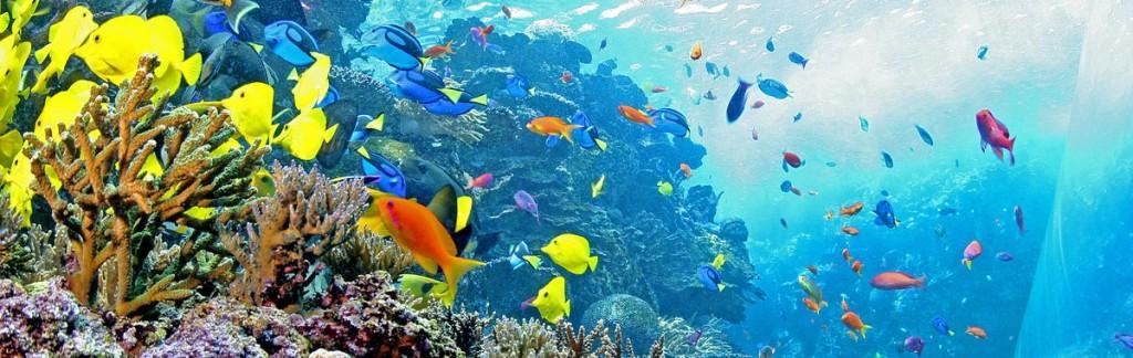 Pretty fish in orange and yellow: A coral reef inside the George Aquarium in Atlanta.