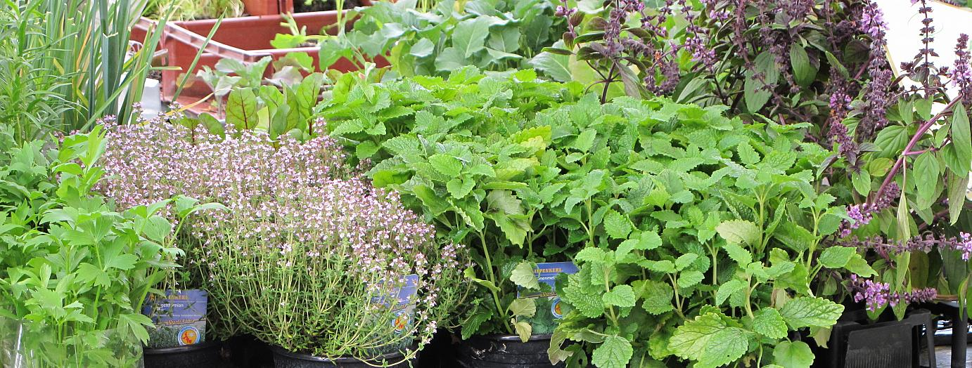 Herbs are a vital ingredient for any cuisine.