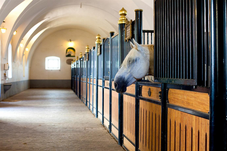 Where are all the horses gone? Photo credit: Boris Pretnar.
