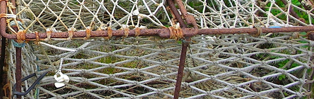 Rusty wire cage. Are we caged in our personality?