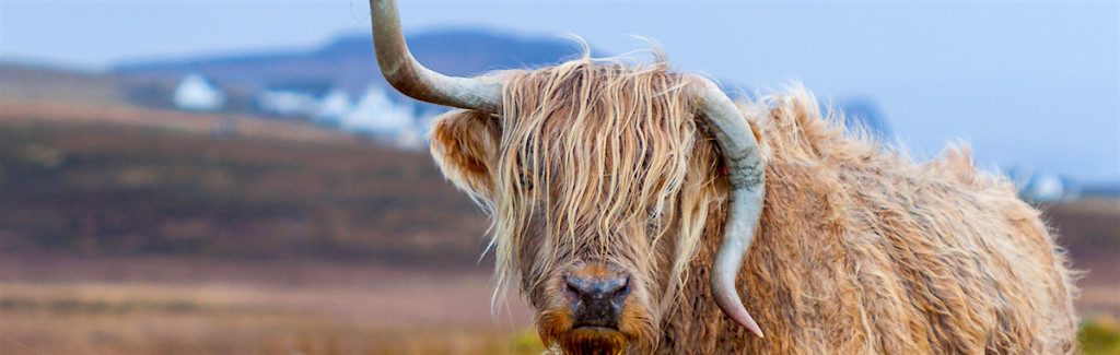 A Galloway by Pexels
