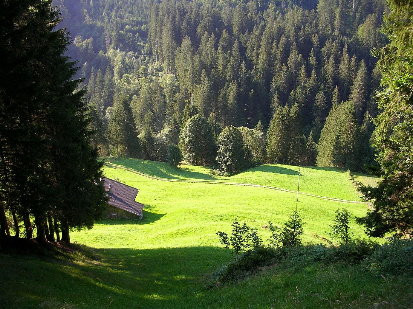 A meadow at Laterns_Vorarlberg